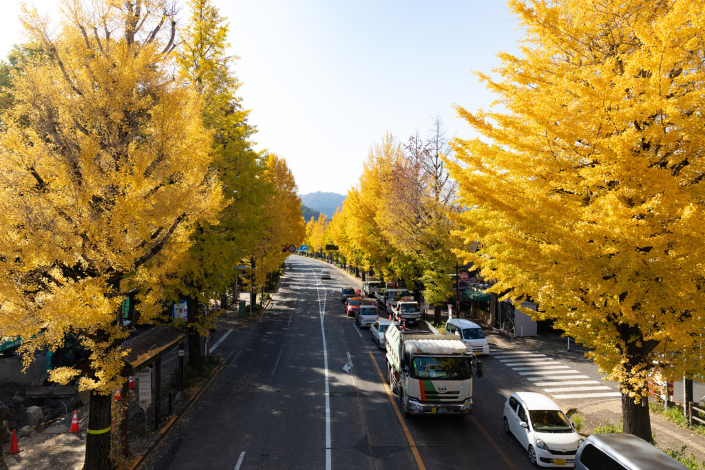 町田街道入口交差点の歩道橋から見たいちょう並木